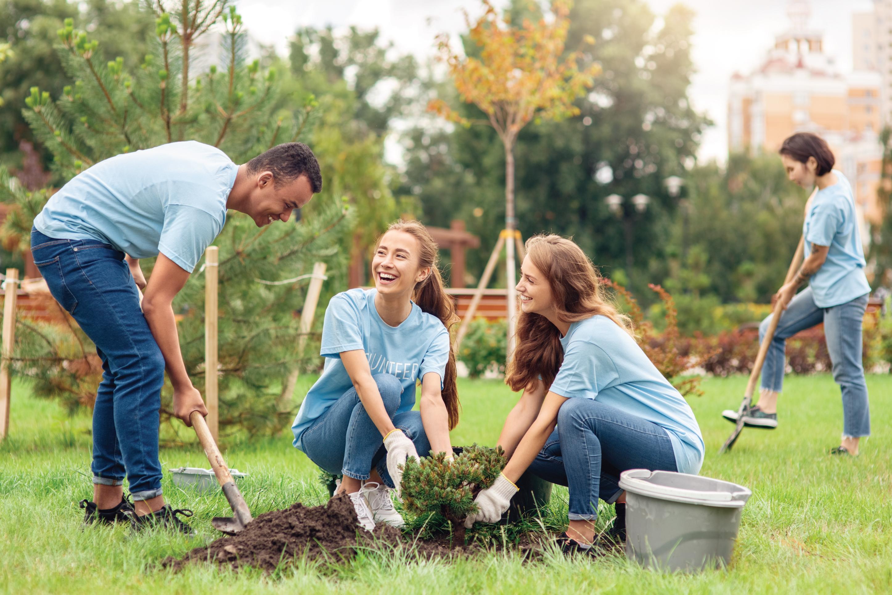 three volunteers planting trees