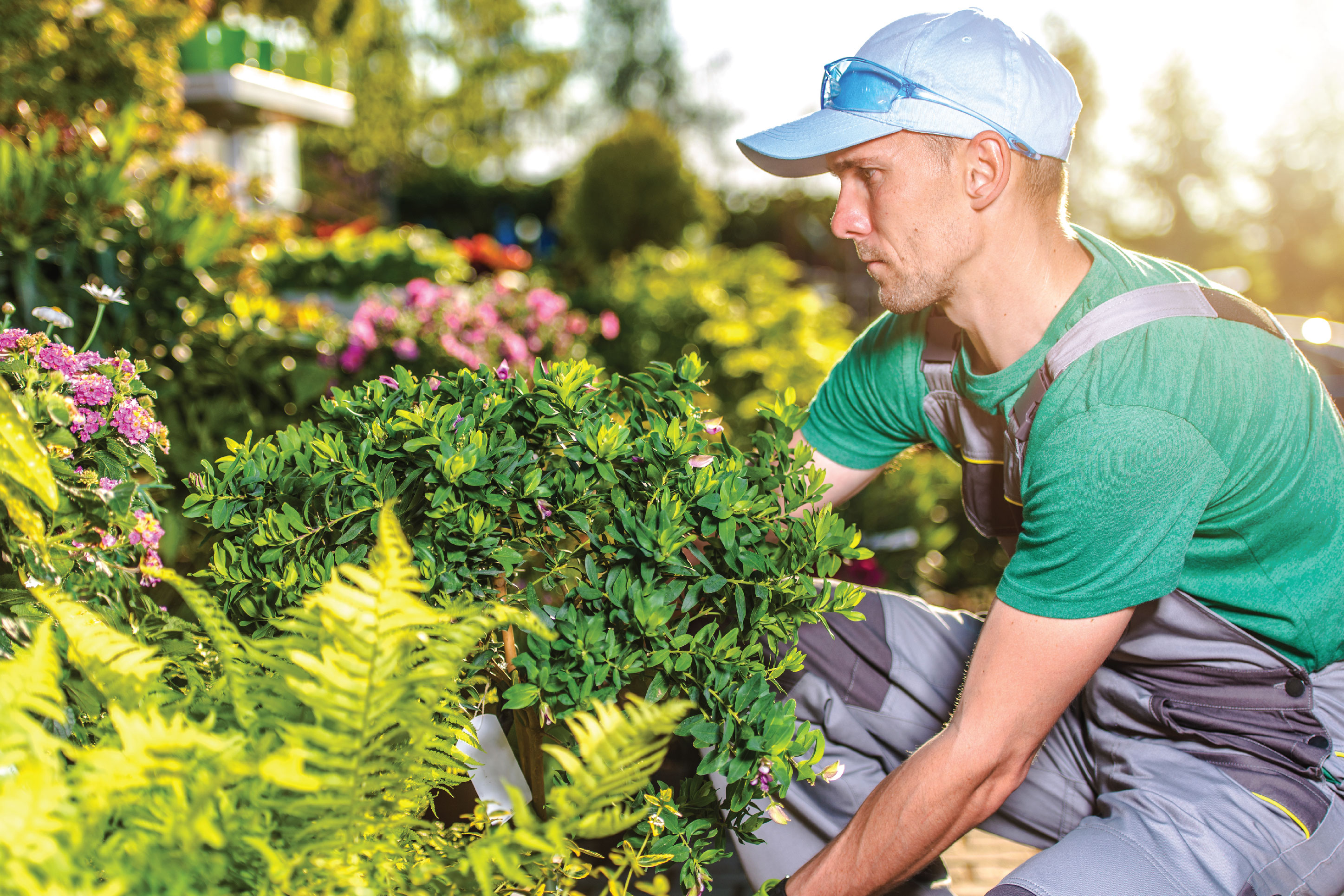 man adding plants and shrubs to landscaping in the yard of a home